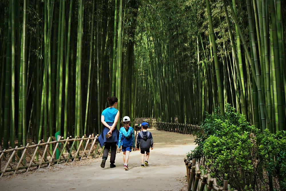 foret-bambous-ulsan
