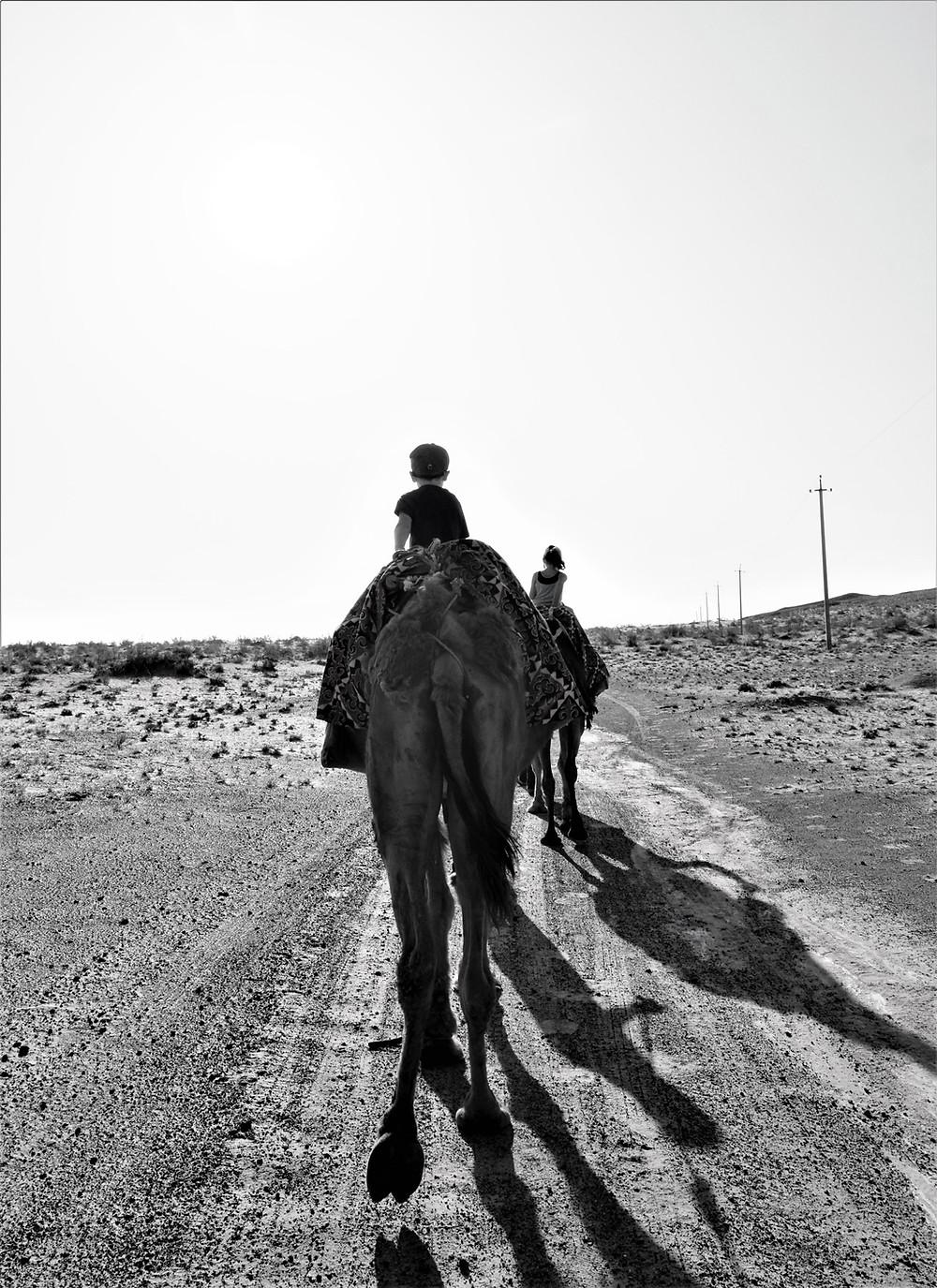 balade-dromadaire-desert