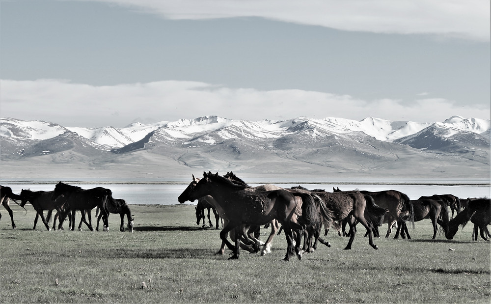 chevaux-kirghizistan