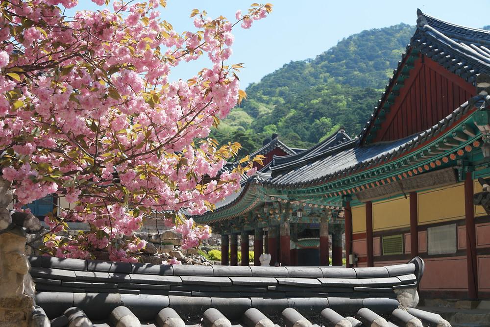 temple-haiensa
