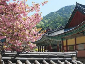 Vivre en famille l'expérience du Temple stay à Haiensa – Corée du Sud (1-3 mai)