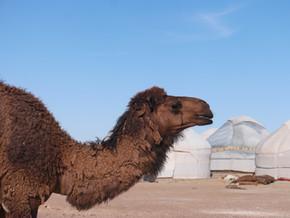 Passer une nuit en yourte en famille dans le désert en Ouzbékistan (7-8 juin)