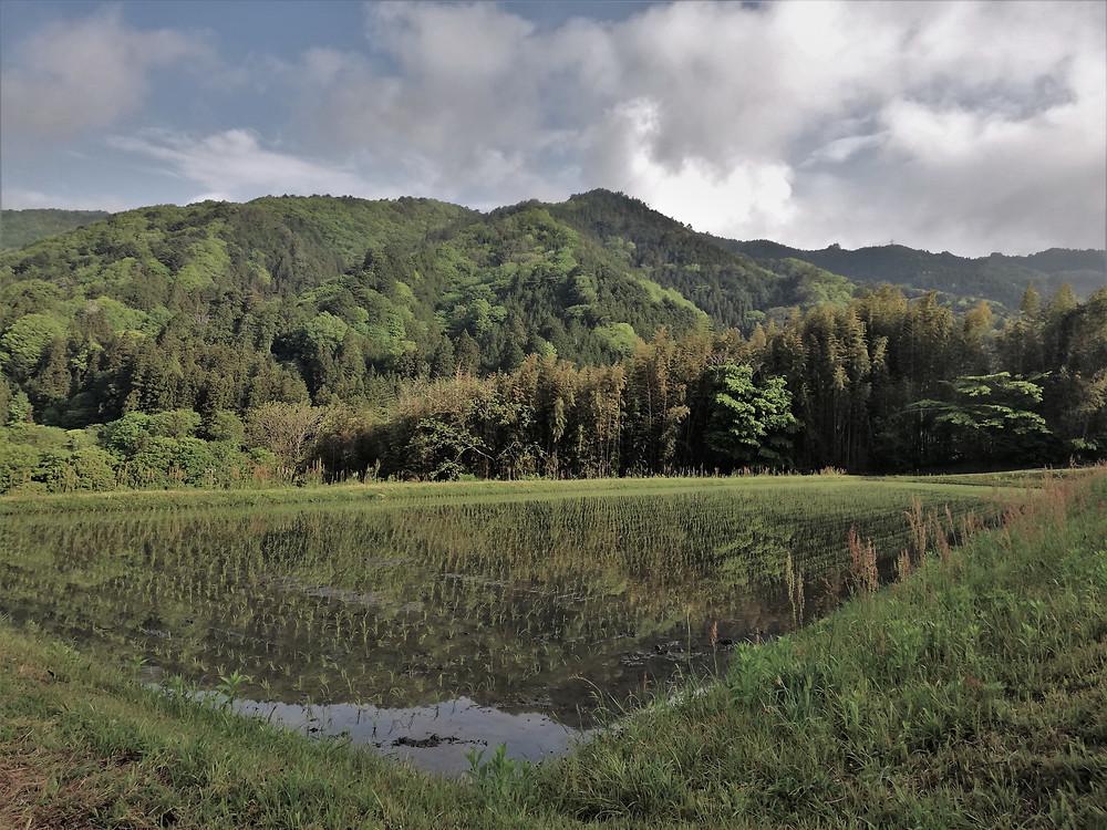 rizieres-alpes-japonaises