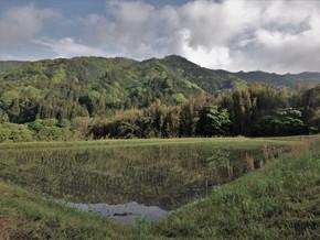Découvrir le Japon hors des villes : les Alpes japonaises et le mont Fuji (15-23 mai)