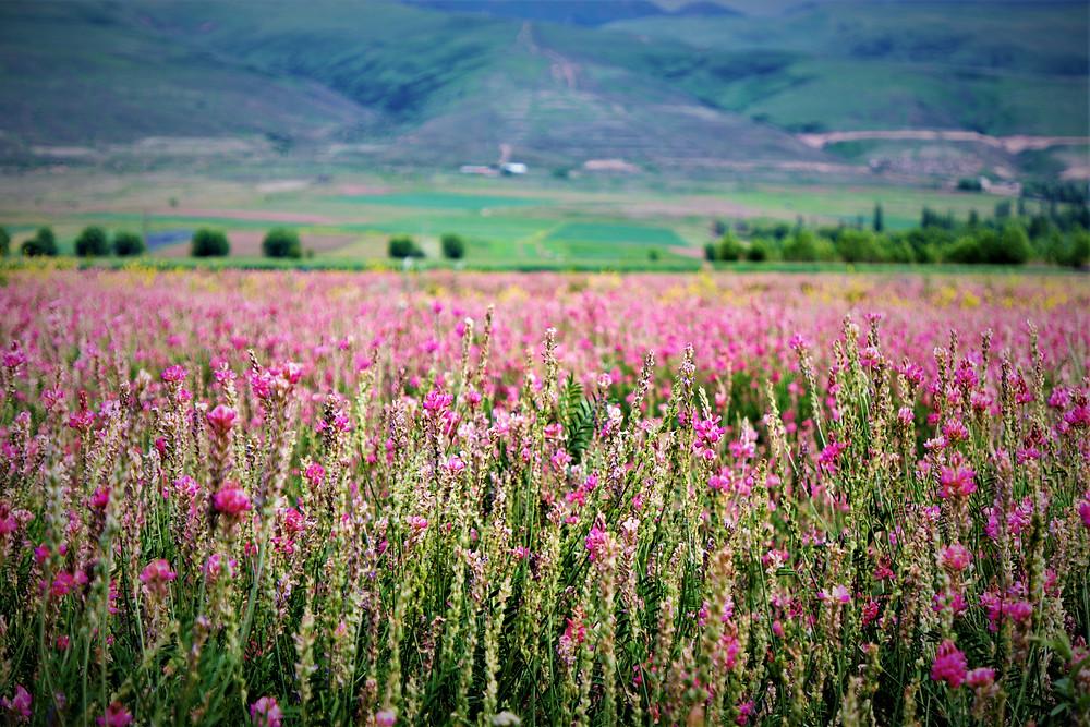 plaines-fleurs-karakol
