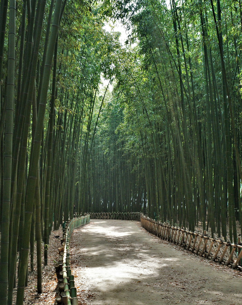 forêt-bambous-ulsan