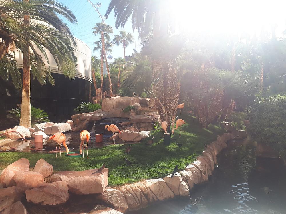 flamants roses Flamingo