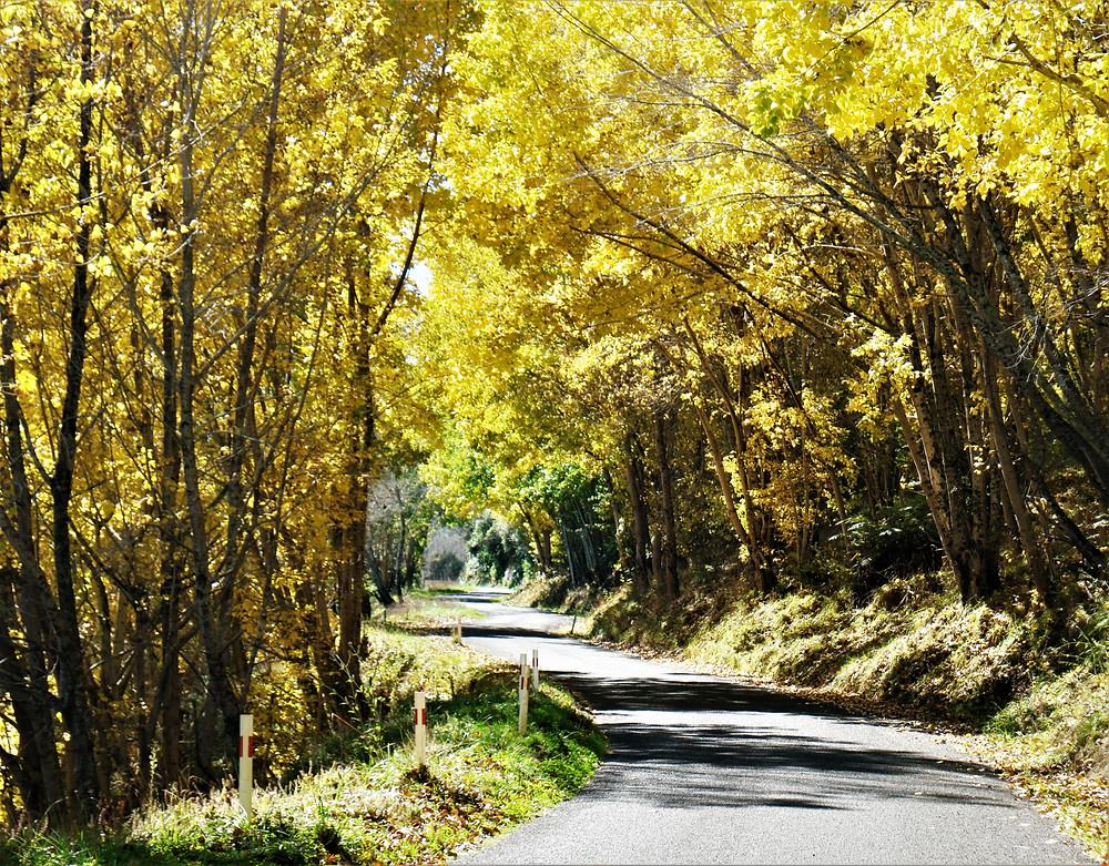 automne-nz