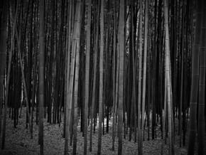Les tumulus de Gyeongju et la forêt de bambous d'Ulsan en famille – Corée du Sud (3-6 mai)