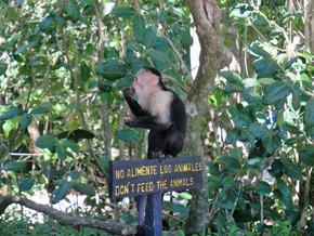 Manuel Antonio et la côte pacifique – Costa Rica (14-16 janvier)
