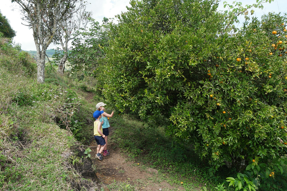 mandarines-jerico