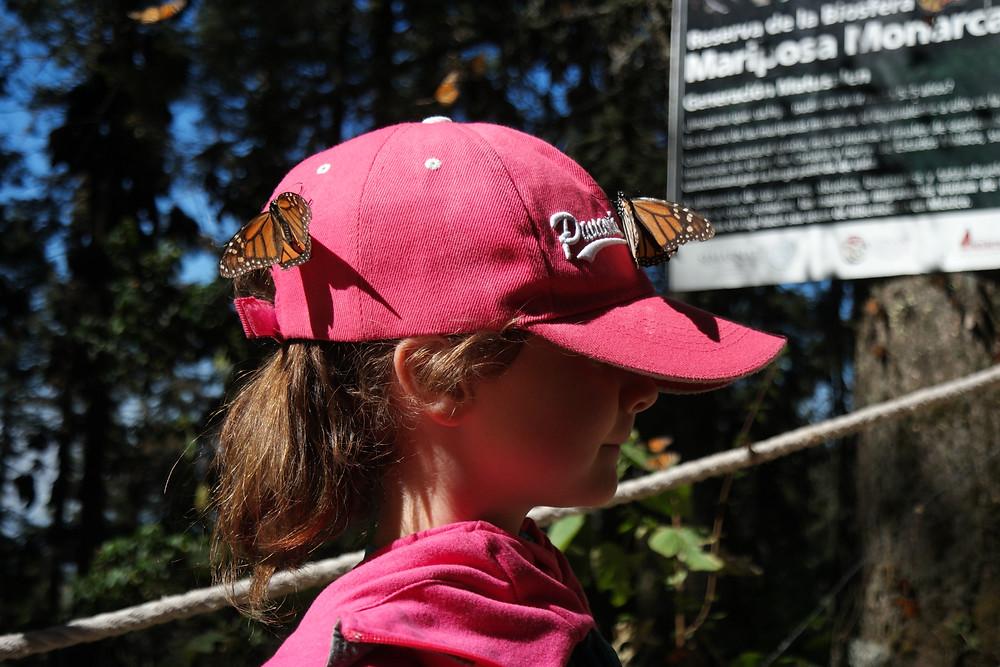 eylia-papillon-monarque