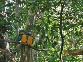 Bilan de notre séjour au Costa Rica (6-21 janvier et 30-31 janvier)