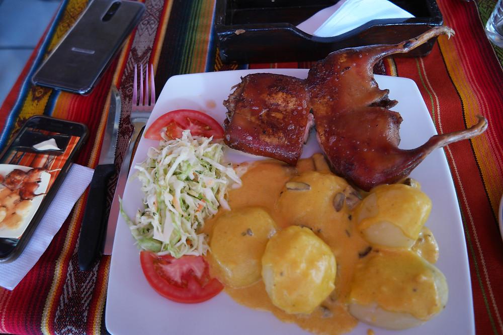 cochon-d'inde-cuy-équatorien