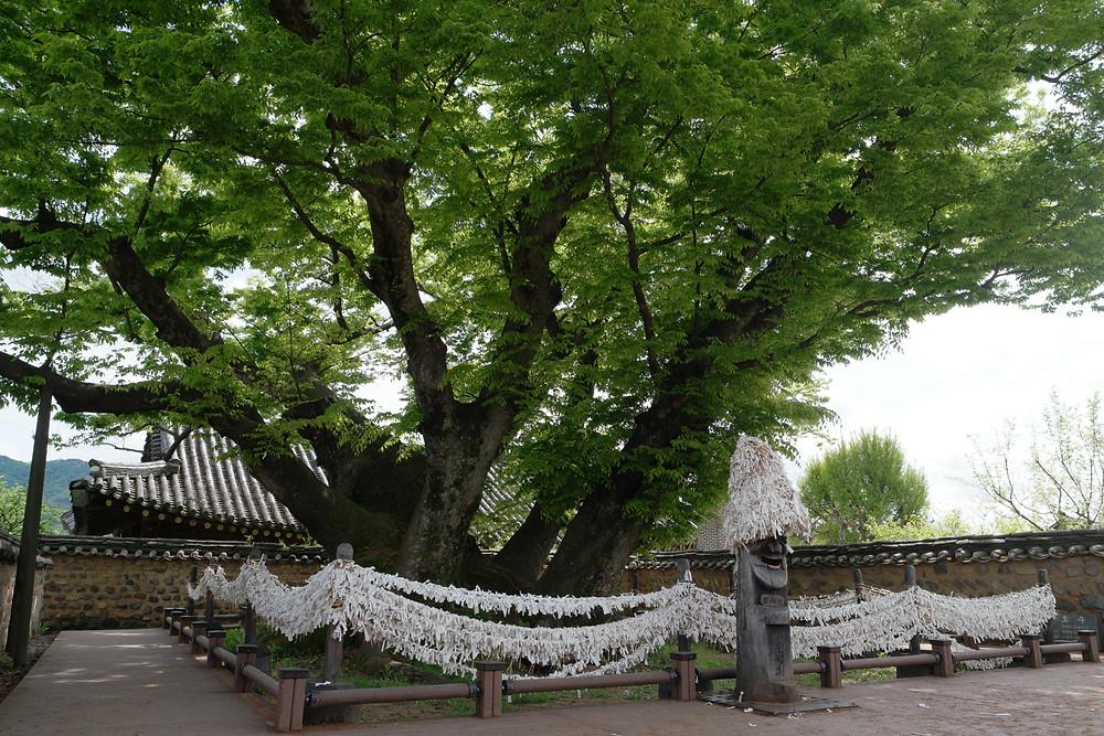 arbre-souhaits-hahoe