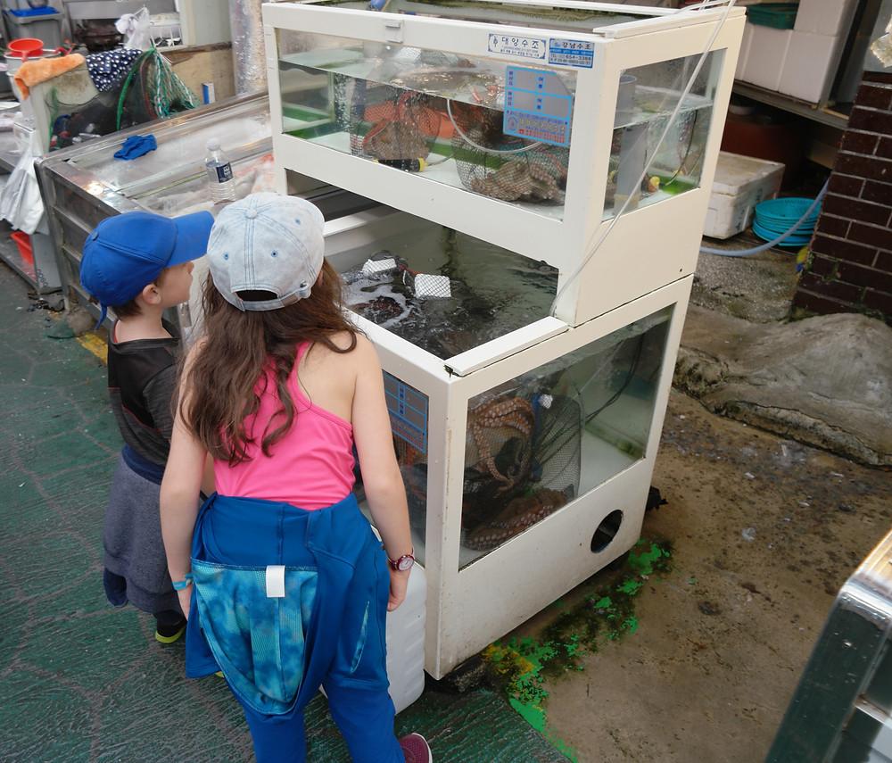 poulpes-marché-daegu