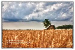 Campo di grano (Codigoro)