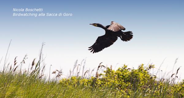 Birdwatching alla Sacca di Goro