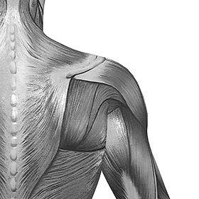 il chiropratico può aiutare con il dolore pelvico