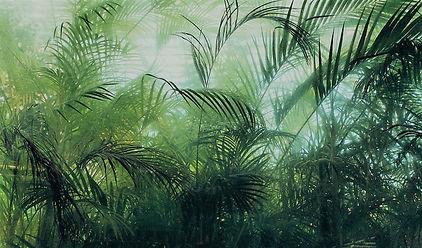 Kyoto+Botanical+Garden+-+Haarkon+in+Japa