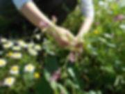 colheitas de primavera.jpg