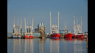 The Economic Impact of N.C. Seafood