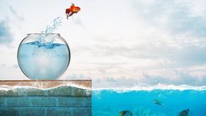 Formation & Bonnes pratiques QVT, prêts pour le grand bain ?