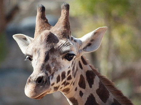 Day 32_ the most gorgeous animals... tot