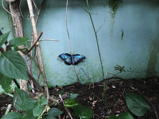 Day 73_ My favourite butterfly 🦋 _#butt