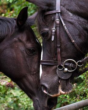Day 113_ first encounter__#horse #horsep