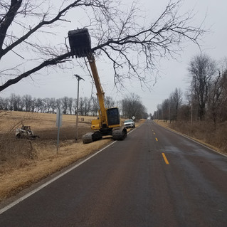 Tree Clearing-