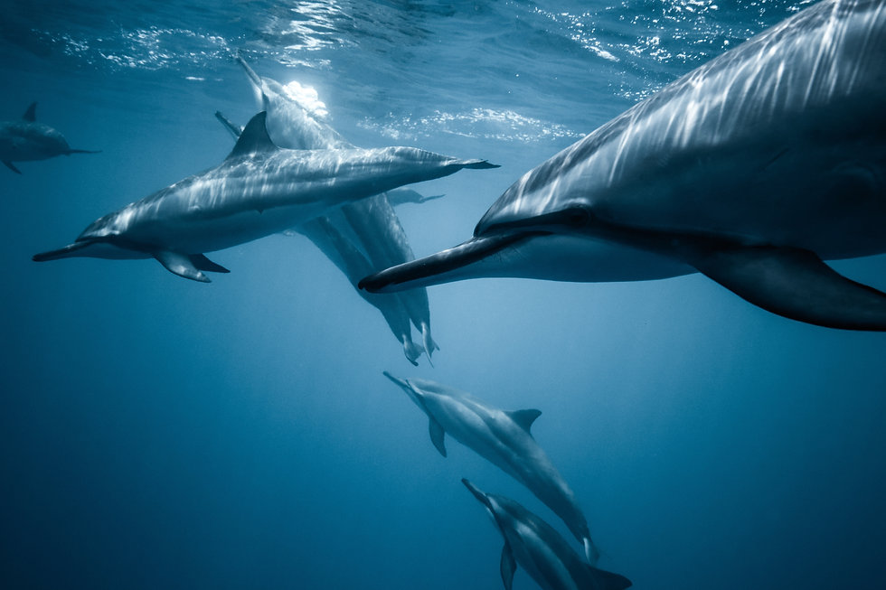 photo-of-pod-of-dolphins-2422915.jpg