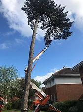 Tree Surgery 1.jpeg