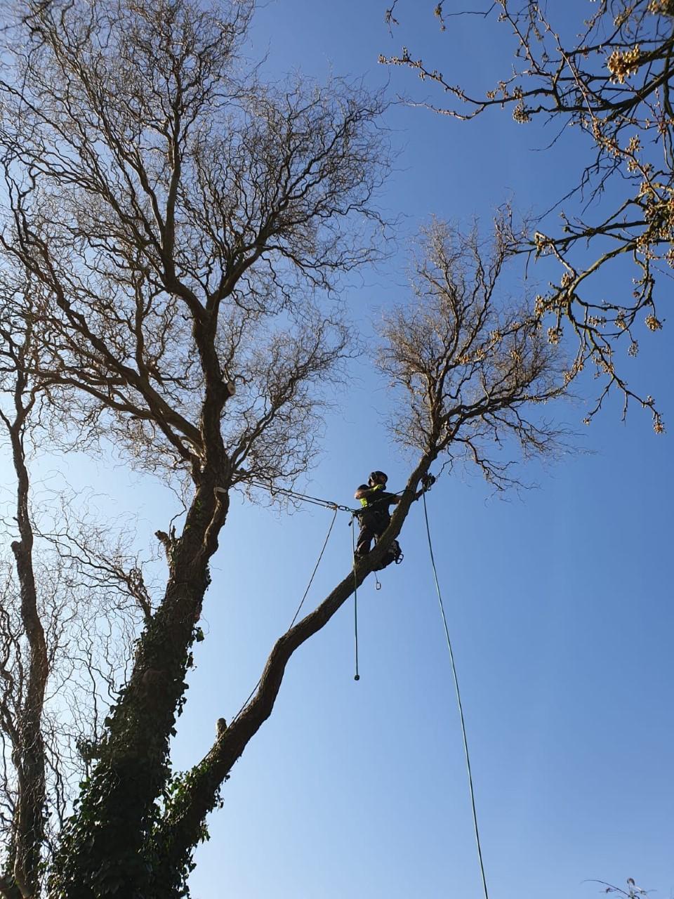 Tree surgery 4