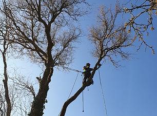 Tree surgery 4.jpg