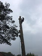 Tree surgery 9.jpg