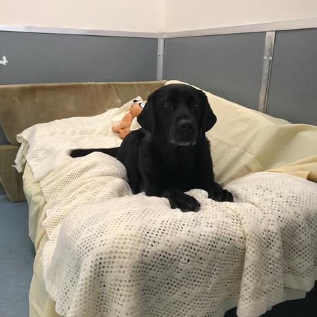 Doggy daycare lounge