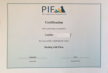 PIF - Certificate dealing with fleas - C
