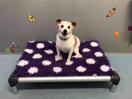 Kuranda aluminium chewproof dog beds!