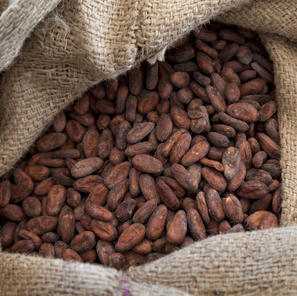 Optimized Cocoa Bean Supply Chain