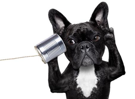 Improve Your Communication. Improve Everything.