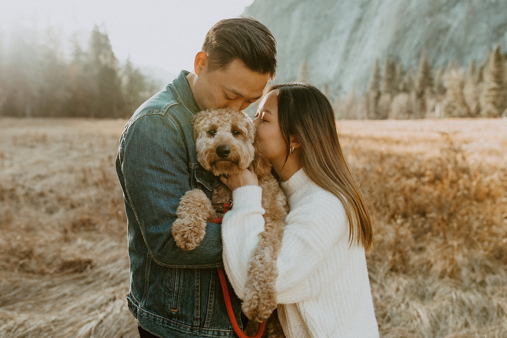 Sunny Yosemite Valley Anniversary inspiration. Tunnel view photo ideas. Golden Doodle puppy phots in Yosemite Valley ideas. Anniversary photo ideas.