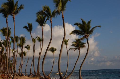 Domincan Republic: Punta Cana