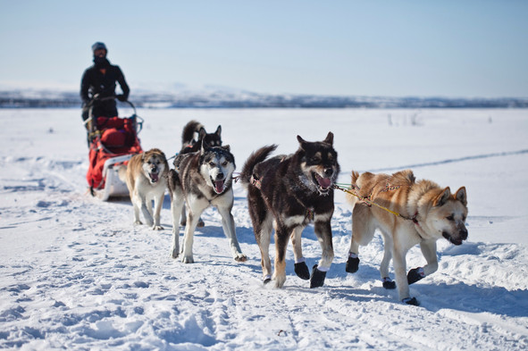 Lapland: Husky & Reindeer Farm, Glass Igloos, Northern Lights.
