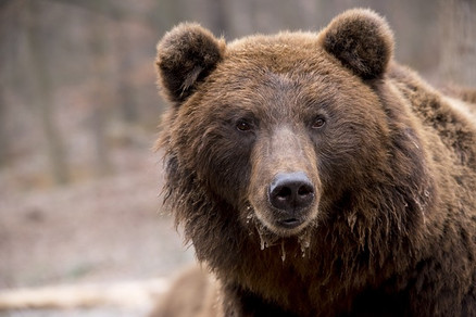 Canada: Saw Grizzly & Brown Bears!