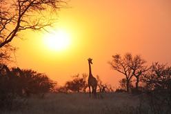 Zambia.