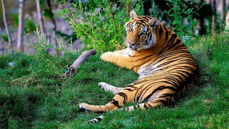 India: Kerala - Periyar Jungle Tiger Walk