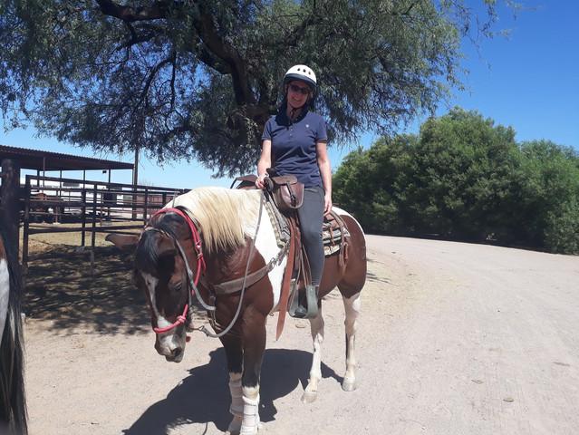 Arizona - horse.jpg