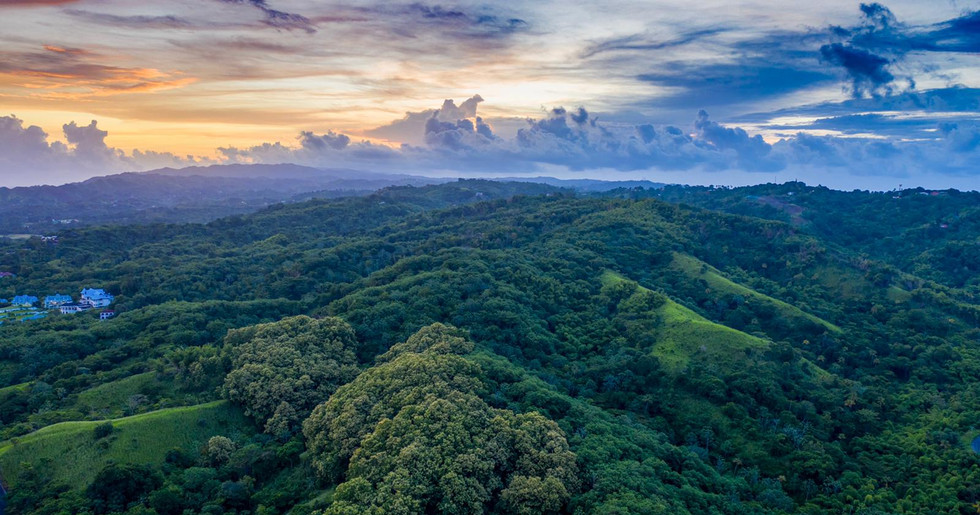 Rainforest panorama from Vlogger Benny.j