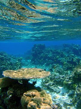 Pacific Islands: Fiji.